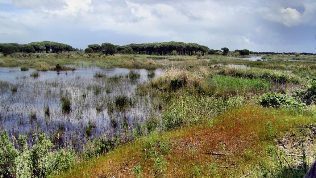 Coto Doñana Feuchtgebiet